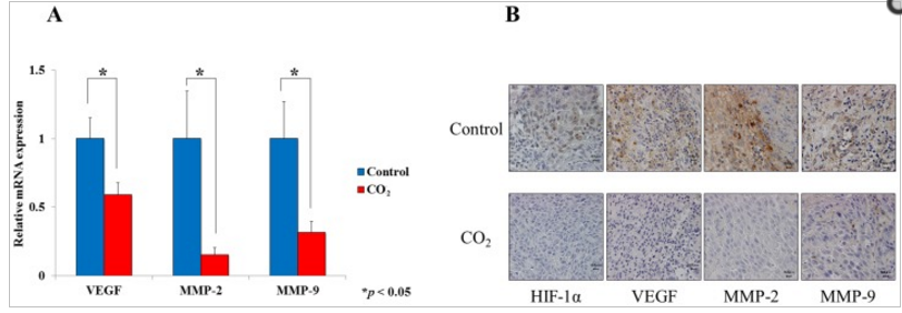 transcutaneous co2 on hsc-3 tumor growth 3